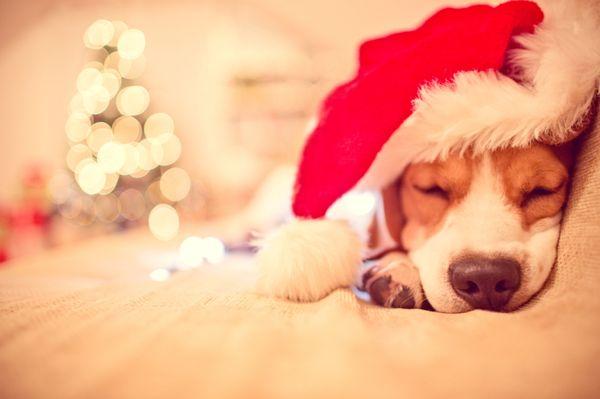 Konsumrausch zur Weihnachtszeit: Auf auf ins Getümmel