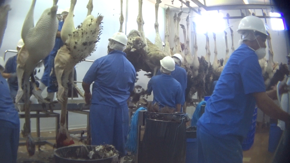 Aus der Strauß Getötete Vögel im Schlachthaus