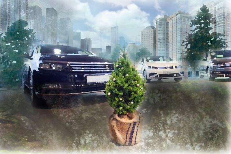 Abgas-Betrug zu Lasten der Umwelt - Pflanzmich.de sorgt für grüne Entschädigung bei betroffenen Schummel-Dieselfahrern. Die Zuckerhutfichte ist eine der grünen CO2-Ausgleichsprämien
