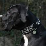 Glamour D. Halsband Python, schwarz