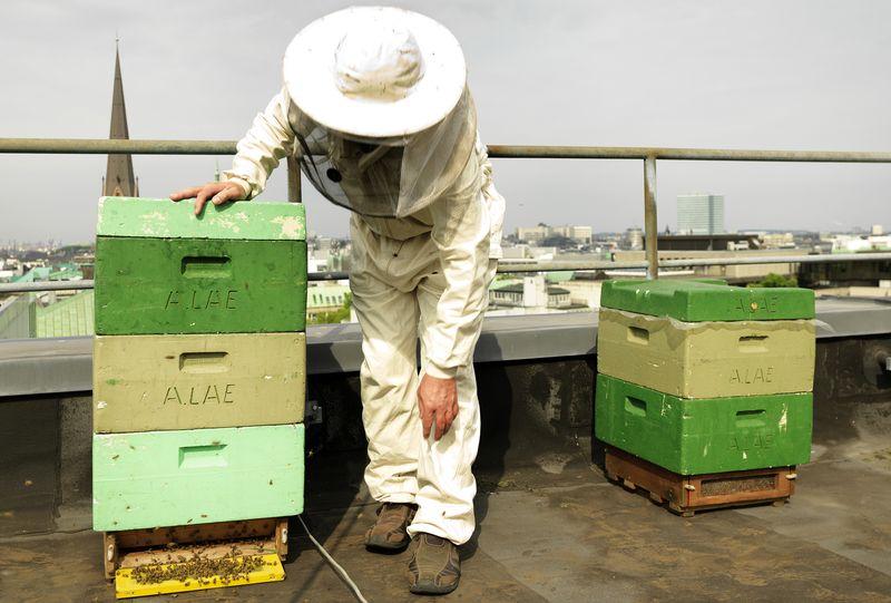 Bienestöcke auf dem Dach des Park Hyatt Hamburg mit Imker Michael Bauer
