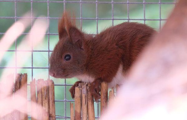 Jährlich werden etwa 1.500 hilflose Wildtiere in der Wildtierstation Hamburg abgegeben
