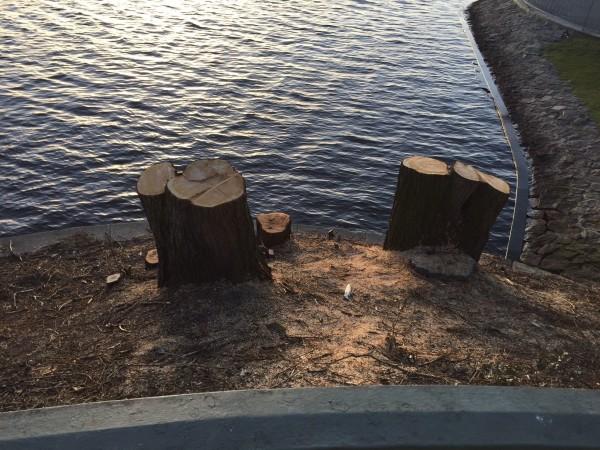 Sinnlose Baumfällerei: Immer wieder ein Ärgernis für die Hamburger