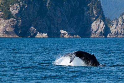 Schützt die Wale