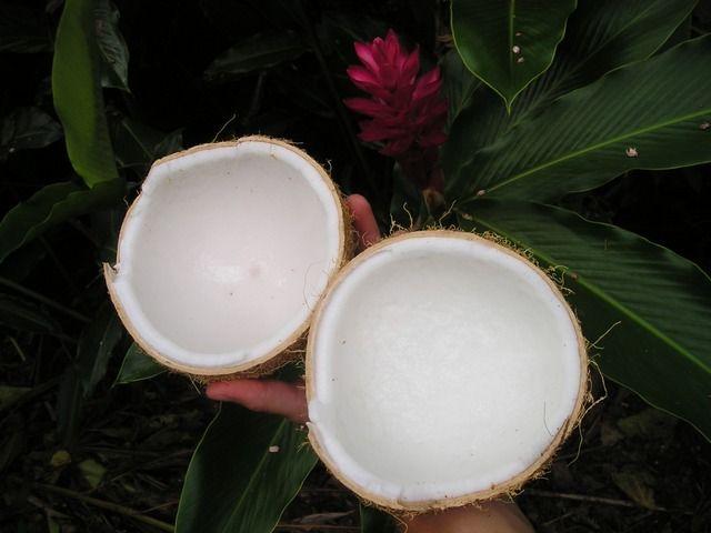 Kokosöl - ein wahres Multitalent