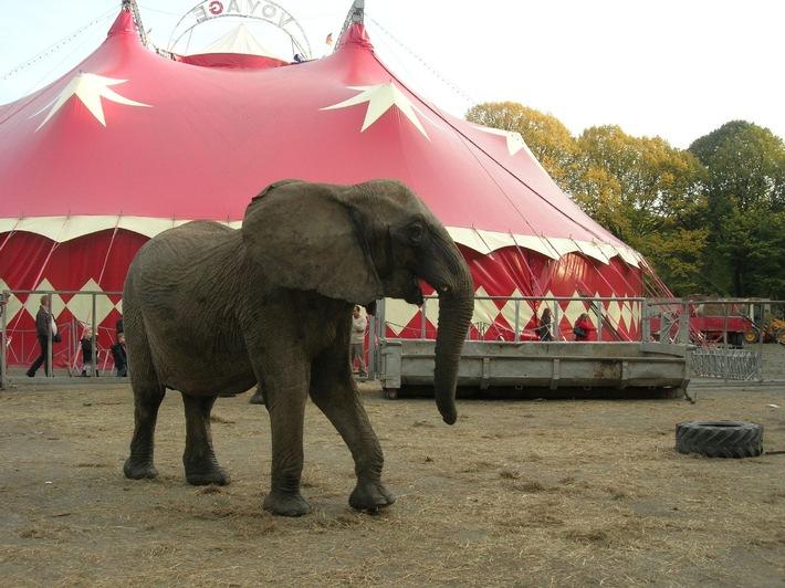 Trostloses Gehege: Elefant im Zirkus Voyage