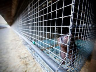 Vier Pfoten fordert Schließung verbleibender Farmen
