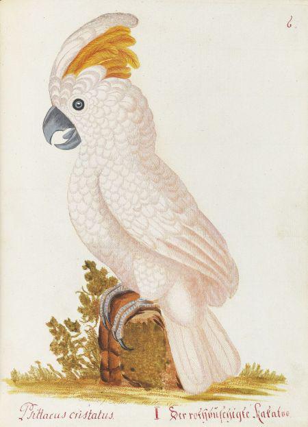 Spalowsky schießt den Vogel ab