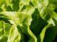 Der Bedarf an landwirtschaftlichen Produkten steigt stetig an