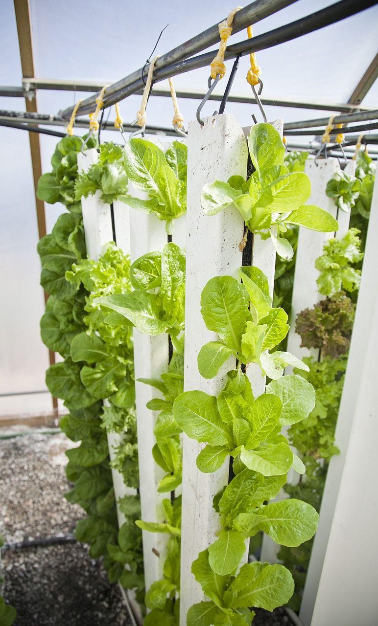 Mal was Neues Hängende Pflanzen sparen Platz