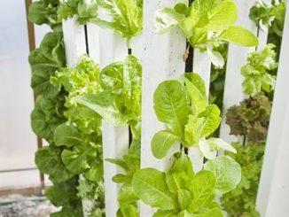 Vertical Farming - eine Option für Pflanzenanbau auf wenig Raum
