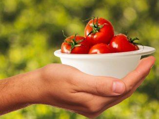 Tomaten, Kräuter und Salat vom eigenen Balkon