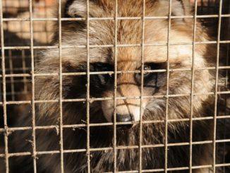 Das ist Tierquälerei und gehört endlich final verboten