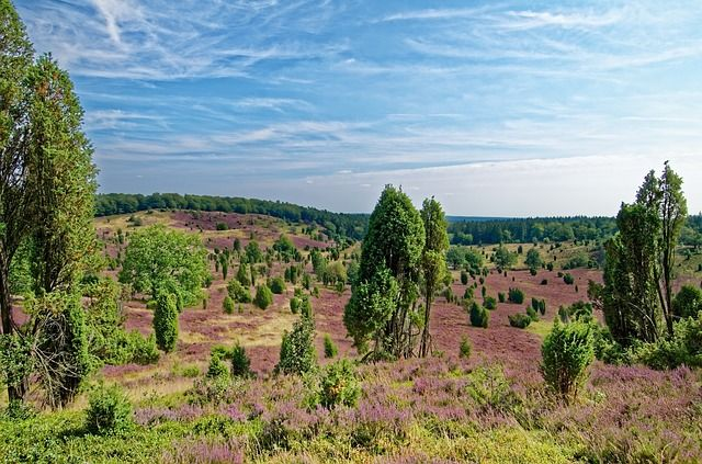 Herrliche Natur in der Lüneburger Heide