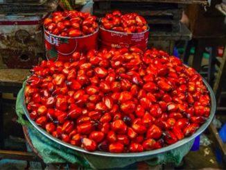 Palmöl - eine umstrittene Ölpflanze