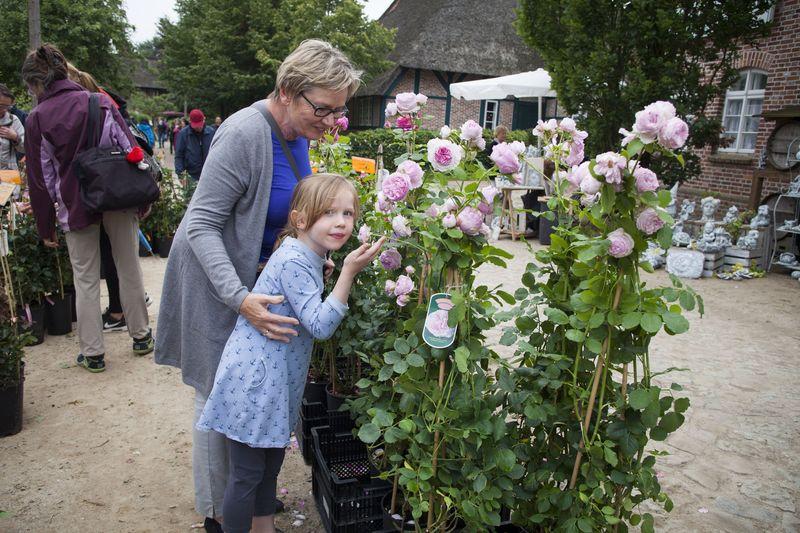 Große Rosenvielfalt beim Rosenmarkt 21.7. am Kiekeberg