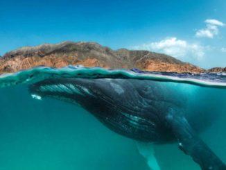 Die geheimnisvolle Welt unter Wasser