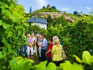 Führung durch das Weingut Hoflößnitz in Radebeul. Bildnachweis: TVED/Sylvio Dittrich