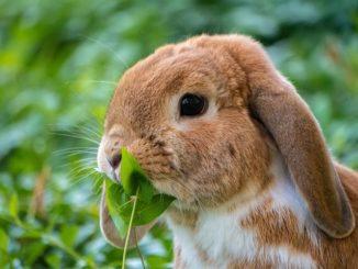 Drum merke: Der Mensch ist kein Kaninchen