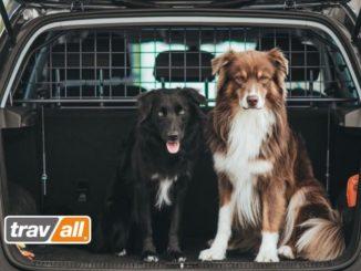 Mit einem Trenngitter sind Hunde auch im Elektroauto optimal gesichert