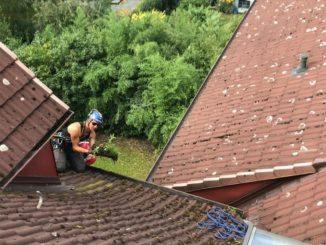 Arbeiten von den Bäumen bis zum Dach