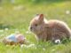 Der kleine Mümmler freut sich auf schon auf Ostern