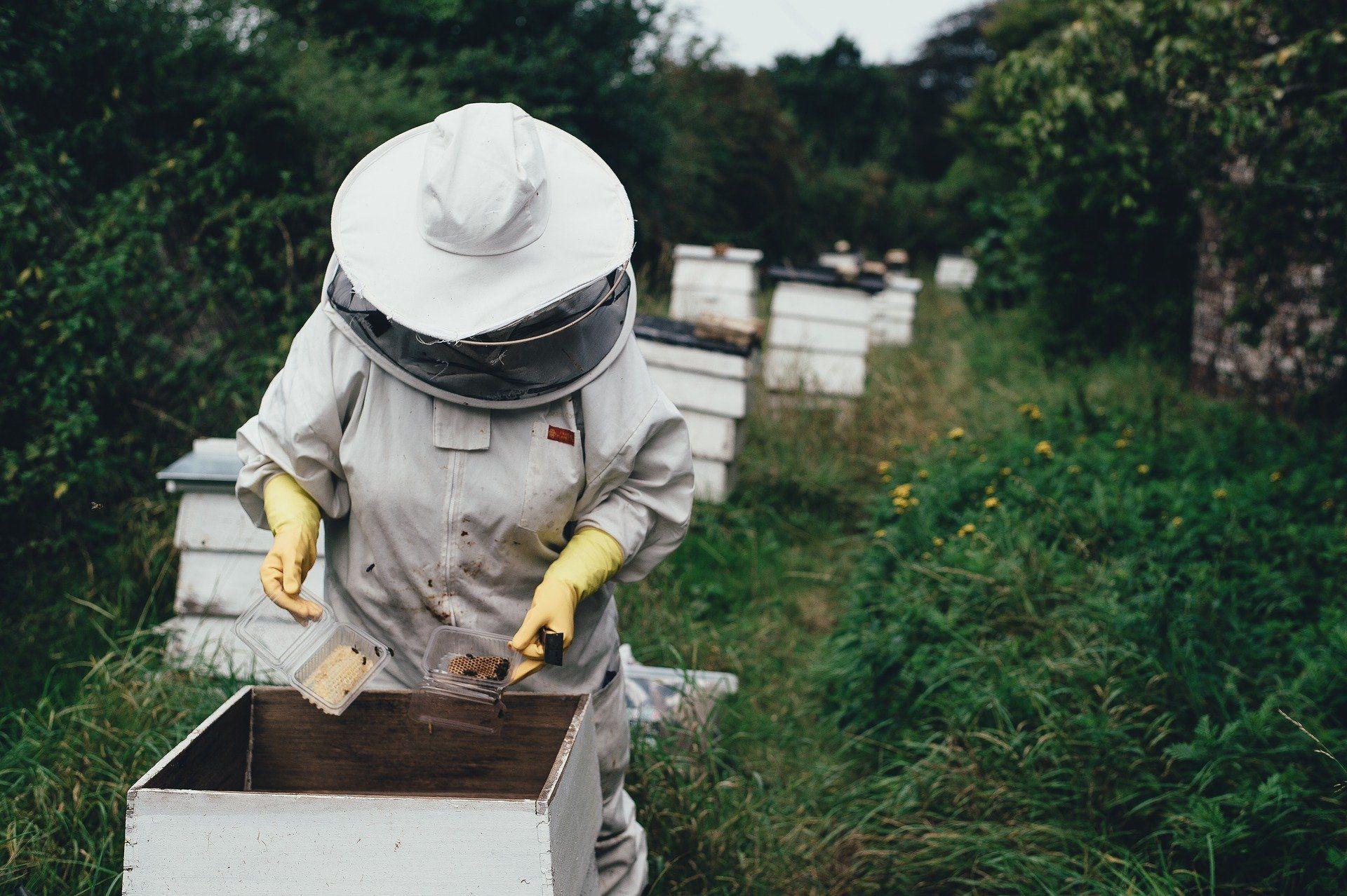 Die unglaubliche Nützlichkeit der Bienen rückt immer mehr in den öffentlichen Fokus