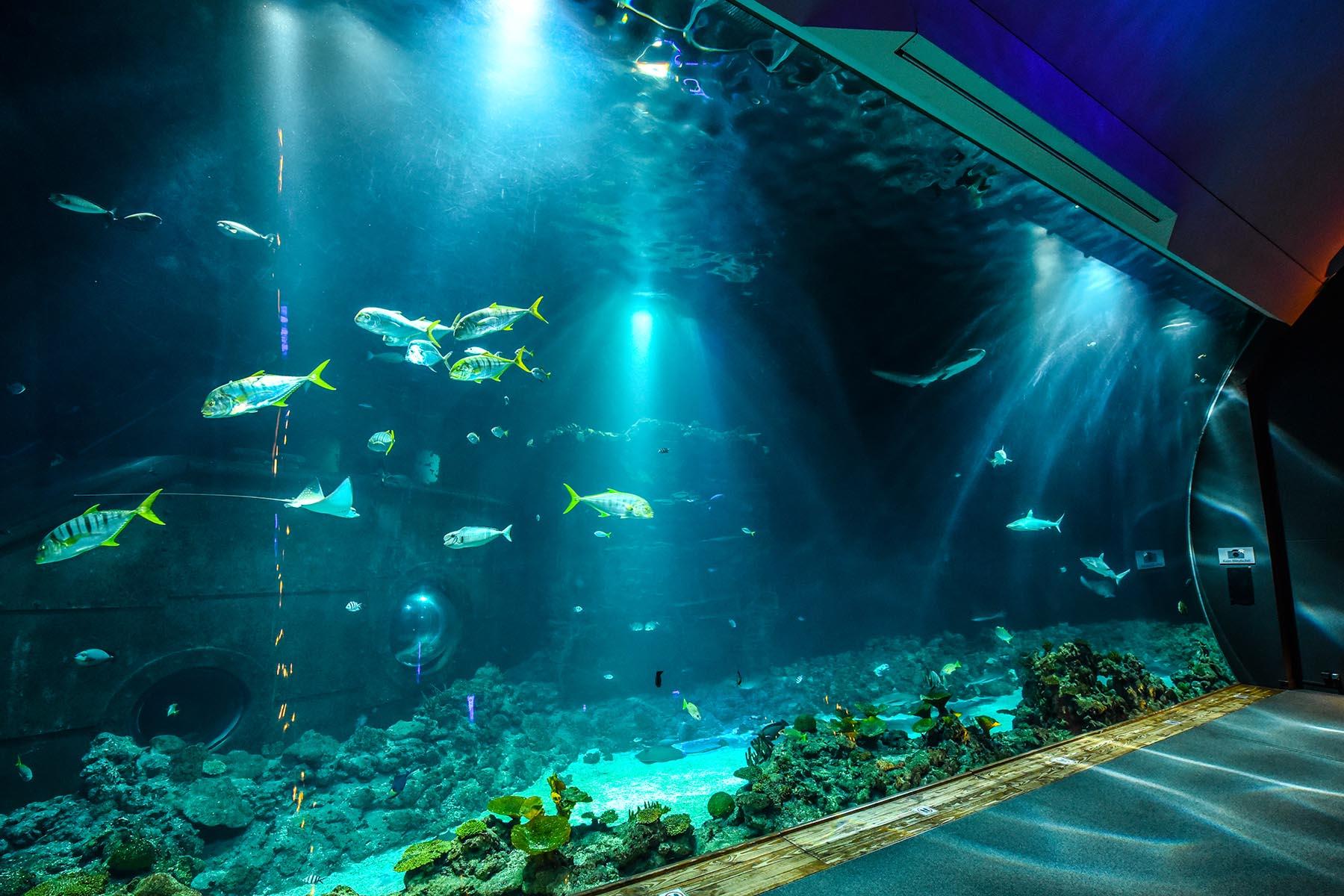 Wiedereröffnung des Tropen-Aquariums