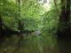 Natur pur – mitten in Hamburg auf der Alster