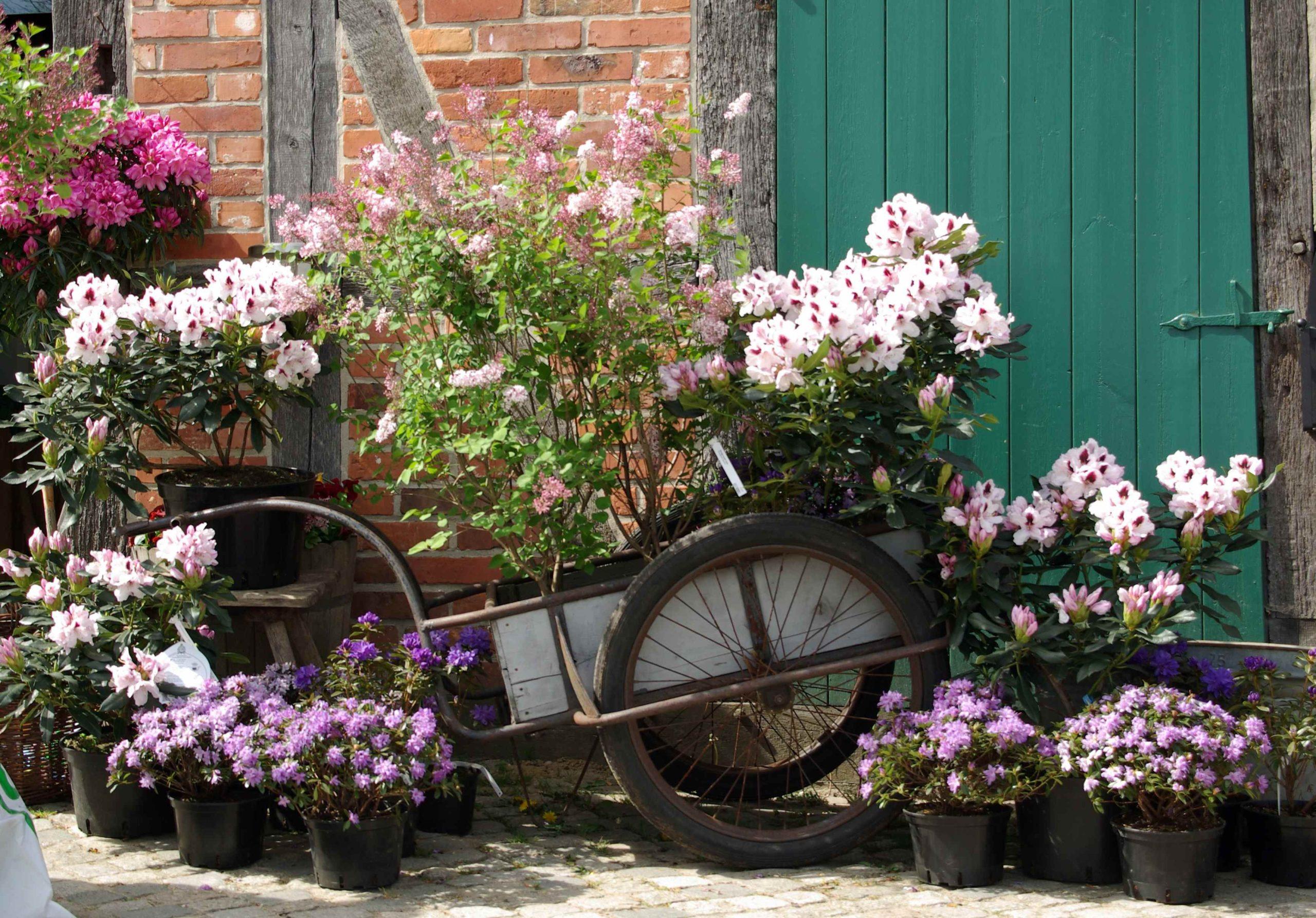 Rosen - Pflanzenmarkt - Spezial 2020 im Sommer 29.+30.8.20 - Bild FLMK (5) (002)