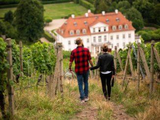 Spaziergang durch die Weinberge zum Schloss Wackerbarth. Foto Martin Förster