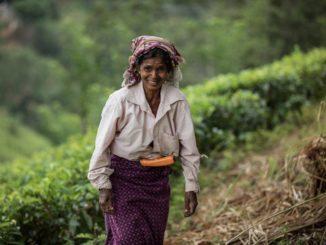 Teeindustrie in Sri Lanka: Ein Wirtschaftszweig im Wandel?
