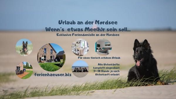 Verreisen mit Hund: Nützliche Tipps und Unterkünfte für Ferien an der Nordsee
