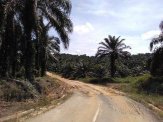 Agrokraftstoffe haben keine Zukunft