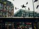 Tauben sind besonders in Großstädten ein Plage