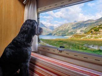 Hundegerechte Wohnmobile sind ideal für entspannte Urlaubstage mit den Vierbeinern.