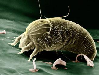 Ein wahrlich erschreckender Anblick - unter dem Mikroskop