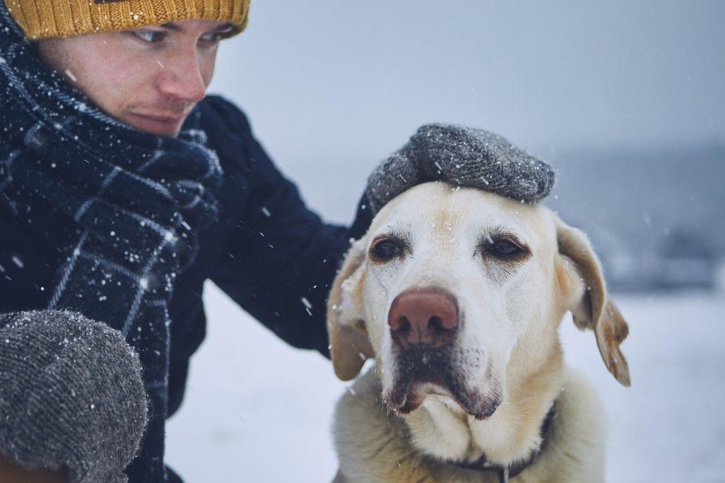 Auch für Hunde sehr gut anwendbar
