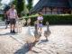 Gänse treiben beim Sommerspaß am Kiekeberg