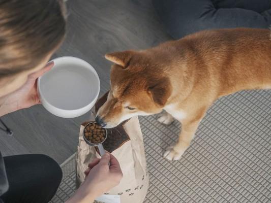 Hundefutter ohne Fleisch