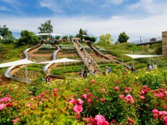 Rutschenhang auf der BUGA Erfurt 2021