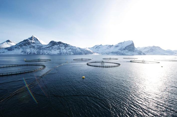 Norwegischer Zuchtlachs ist Testsieger bei Stiftung Warentest